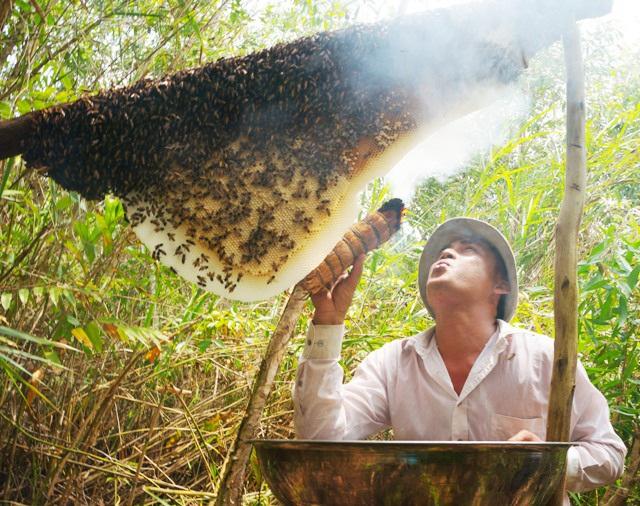 Cách lấy mật ong nguyên chất trên rừng